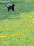 Woofgang carrying hose